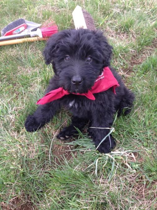 Chark pup
